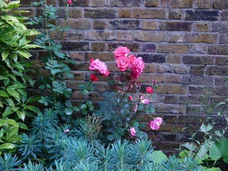 Розы в садах Св. Георгия