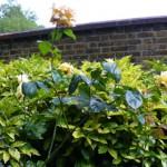 Сады Св.Георгия в Лондоне. Тихо и очень красиво