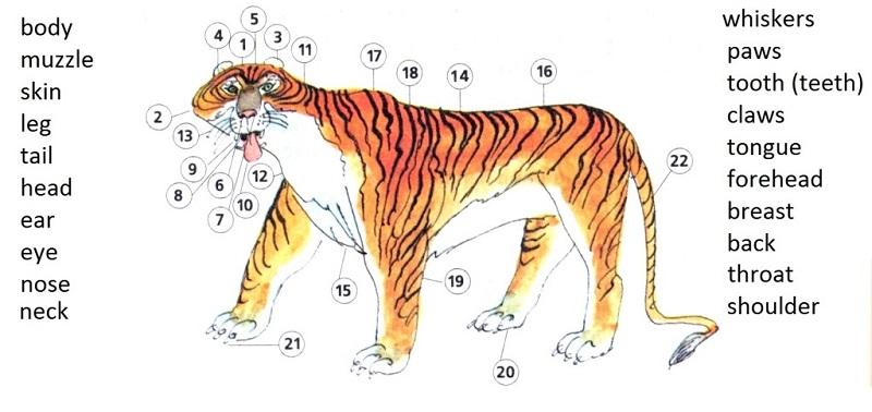 Описание животного на английском языке