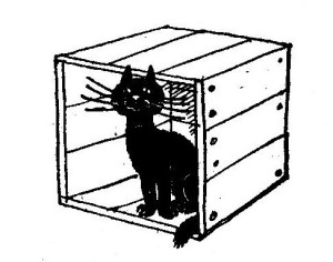 The black cat is in the box.2