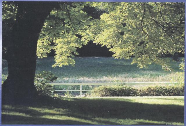 Seasons. Картинки для описания