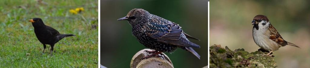 The British Birds Quiz