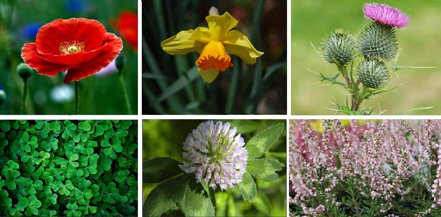The British Nature Texts and Quiz